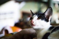 (1) 2 czarny kota koloru halftone kiciuni wersi biel Obraz Stock