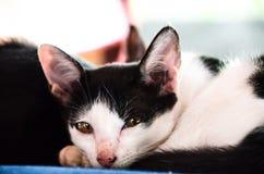 (1) 2 czarny kota koloru halftone kiciuni wersi biel Obraz Royalty Free