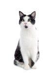 czarny kota śliczny biel Obrazy Royalty Free
