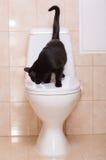 czarny kota ludzka siedząca toaleta Obrazy Stock