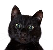 czarny kota portret Obrazy Royalty Free