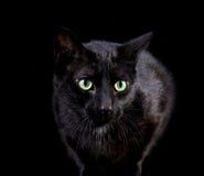 czarny kota pozycja Zdjęcia Royalty Free