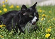 czarny kota trawa Obraz Stock