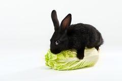 czarny królika kapusty uściśnięcia Obraz Stock