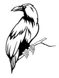 czarny kruk royalty ilustracja