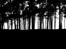 czarny las Zdjęcie Royalty Free