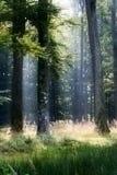 czarny las Obrazy Royalty Free