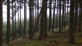 czarny las zdjęcie stock