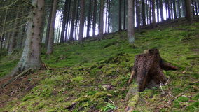 czarny las obrazy stock
