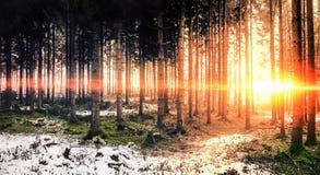 czarny las Obraz Stock