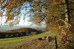 czarny las jesienią Obraz Royalty Free