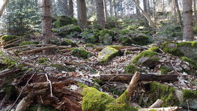 Czarny las na pogodnym Marcowym popołudniu Obraz Royalty Free