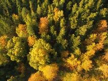 Czarny las przy jesienią Fotografia Stock