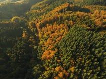 Czarny las przy jesienią Zdjęcie Stock