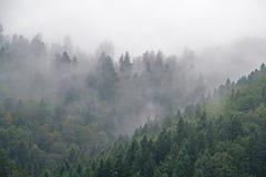 Czarny las w mgle Obrazy Royalty Free