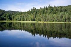 czarny lasu jezioro Fotografia Royalty Free