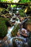 Czarny lasu zatoczka Obraz Royalty Free