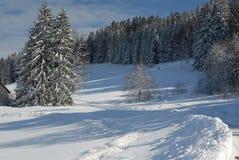 czarny lasu zima Zdjęcie Royalty Free