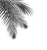 Czarny liść drzewka palmowego tło Zdjęcia Stock