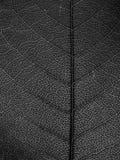 czarny liść makro- biel Zdjęcie Stock