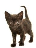 Czarny młody kot z kichnięcie chorobą Zdjęcia Royalty Free