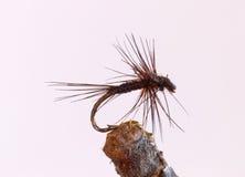 Czarny malutki komarnica połowu nęcenie fotografia stock