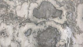 Czarny mech w białej ścianie Obraz Stock