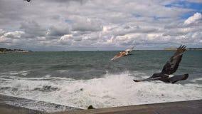 Czarny morze w Sevastopol Fotografia Stock