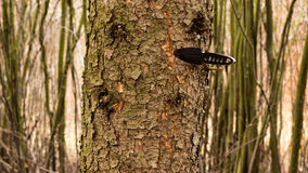 Czarny nóż rzucający w drzewo Obraz Stock