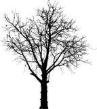 czarny nagi drzewo Fotografia Royalty Free