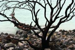 Czarny nieżywy drzewo otaczający wiązką kamienie zbliża błękitne wody Fotografia Stock