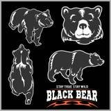 Czarny niedźwiedź dla loga, sport drużyny emblemata, projektów elementów i etykietek, Obrazy Stock