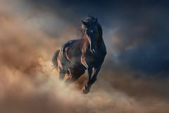Czarny ogiera koń Zdjęcia Stock