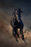 Czarny ogiera koń Obrazy Royalty Free