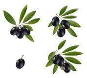 czarny oliwka Zdjęcia Stock