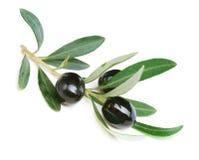 czarny oliwki zdjęcie stock