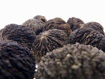 Czarny orzech włoski, owocowy Juglans nigra Zdjęcie Stock