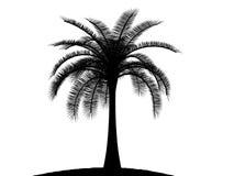czarny palmowego palmtree drzewny biel Zdjęcie Stock