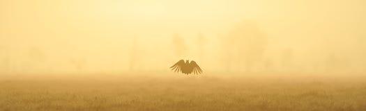 czarny pardwy skok Zdjęcie Royalty Free
