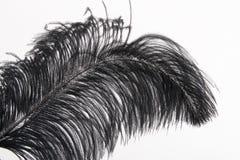 czarny pióra Obraz Royalty Free