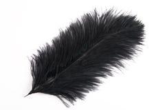 czarny pióra Obrazy Stock