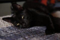 Czarny piękny kot z złotymi oczami obraz stock