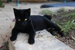 Czarny piękny kot z złotymi oczami zdjęcie royalty free