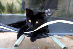 Czarny piękny kot z złotymi oczami obrazy stock