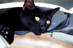 Czarny piękny kot z złotymi oczami zdjęcia stock