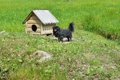czarny pies zdjęcie royalty free