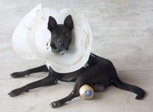 czarny pies Fotografia Royalty Free