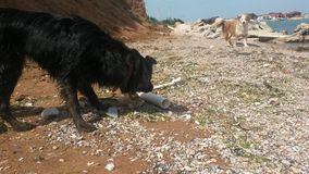Czarny pies, brązu pies Zdjęcia Royalty Free