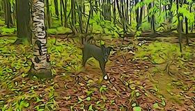 Czarny pies i brzozy drzewo w lesie obraz royalty free