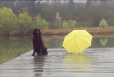 Czarny pies i koloru żółtego umbrela Zdjęcie Stock